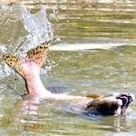 риба кета