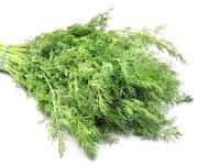 Корисні властивості кропу, насіння кропу користь, чим корисний кріп